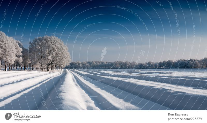 Nature Tree Calm Winter Cold Snow Environment Line Ice Field Frost Furrow Winter vacation Cloudless sky