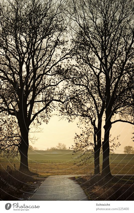 behind tree gate right Environment Nature Landscape Autumn Weather Tree Field Forest Outskirts Deserted Anticipation Contentment Loneliness Grief Change