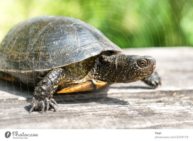 Turtle on wooden desk Nature Old Summer Green Sun Animal Yellow Natural Wood Grass Small Gray Brown Wild Wild animal Table