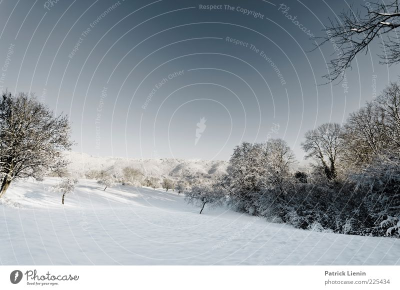 Sky Nature White Blue Beautiful Tree Plant Winter Forest Cold Meadow Snow Landscape Environment Moody Air