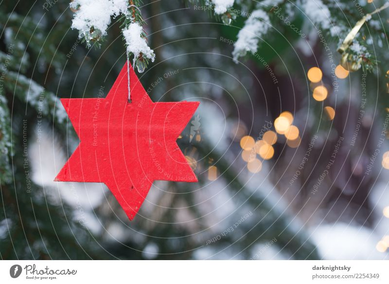Red Star and Christmas Tree Leisure and hobbies Winter Snow Christmas & Advent Christmas tree Event Climate Weather Snowfall Foliage plant Spruce Forest Wood