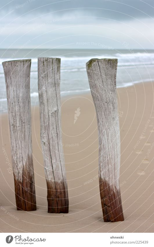 The three from the sand spot Landscape Elements Sand Water Weather Coast North Sea Ocean Break water Gray Beach Wood Colour photo Copy Space top Day Wet Damp