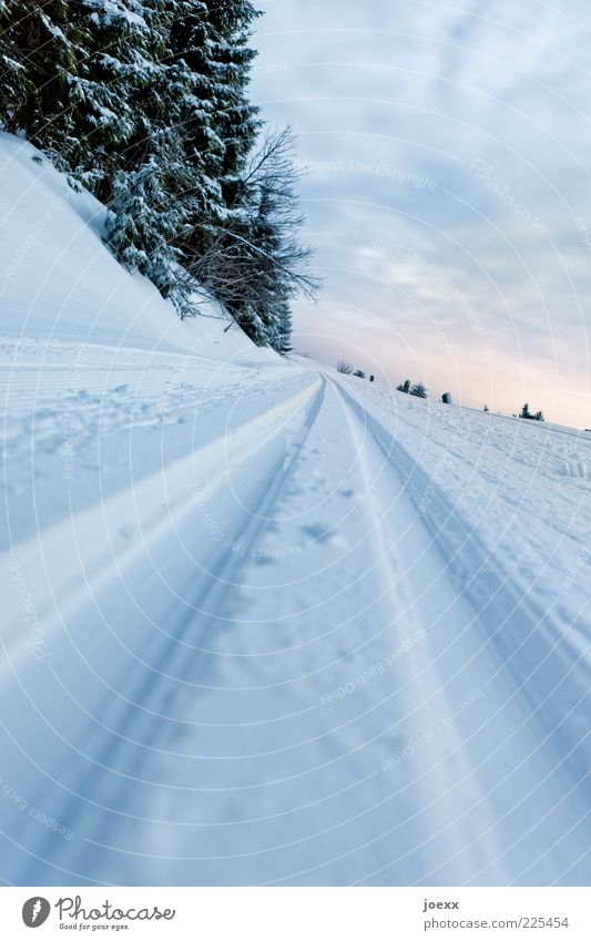 no passing Nature Landscape Sky Clouds Winter Snow Tree Lanes & trails Cold Cross country skiing Cross-country ski trail Colour photo Exterior shot Deserted