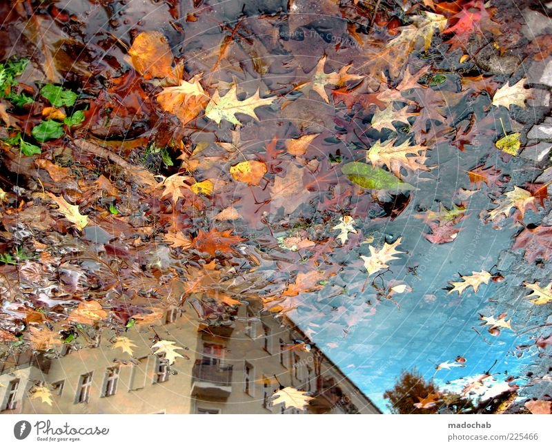 Nature Water Leaf House (Residential Structure) Autumn Environment Architecture Building Rain Wet Facade Esthetic Climate Chaos Puddle Multicoloured