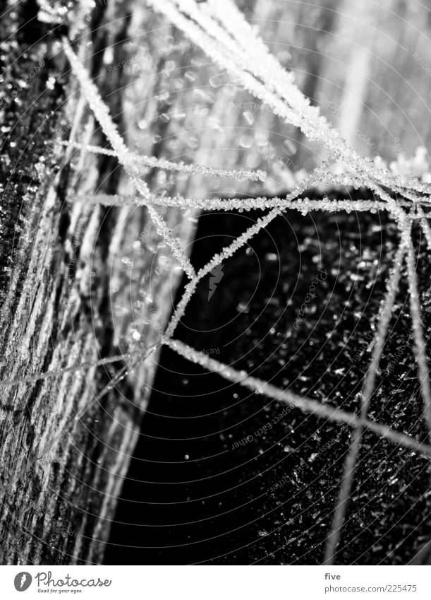 Nature White Winter Black Cold Wood Bright Ice Frost Exceptional Net Tree trunk Pole Ice crystal Spider's web