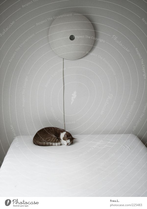 Calm Animal Small Lamp Cat Contentment Sleep Bed Cute Pet Safety (feeling of) Sheet Domestic cat Bedroom Love of animals Pattern