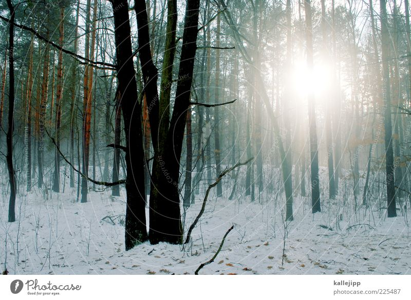 thaw Environment Nature Landscape Plant Winter Fog Ice Frost Snow Tree Wild plant Forest Cold Haze Tree trunk Silhouette Colour photo Multicoloured