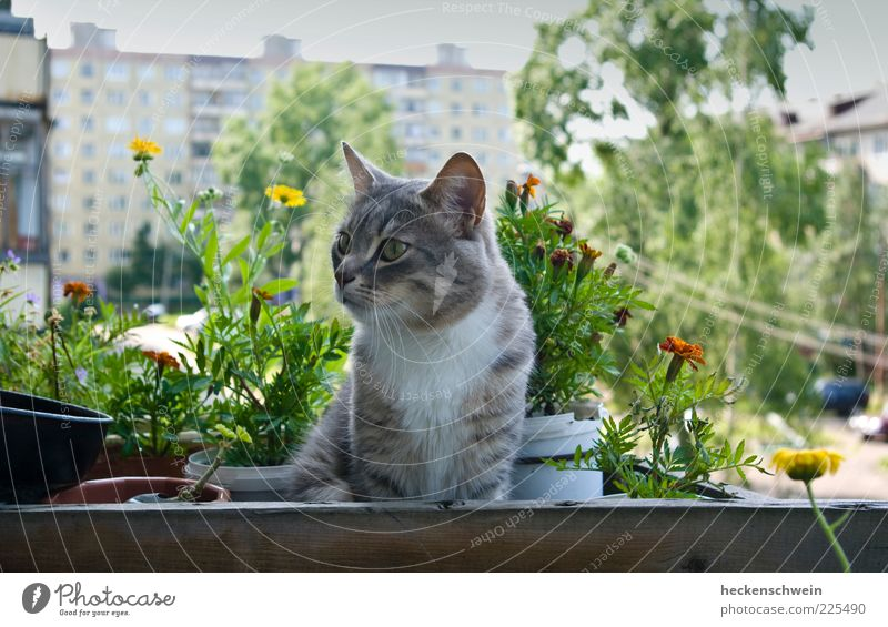 Tree Plant Summer Flower House (Residential Structure) Animal Blossom Cat Wait High-rise Observe Pelt Balcony Pet Flowerpot Courtyard