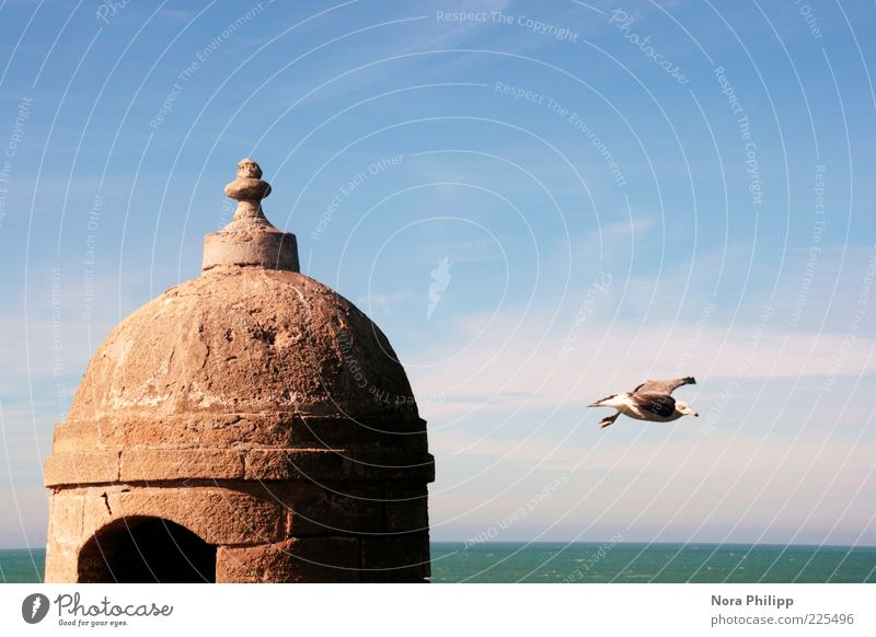 Sky Blue Ocean Animal Far-off places Freedom Architecture Movement Coast Building Dream Air Weather Horizon Bird Flying