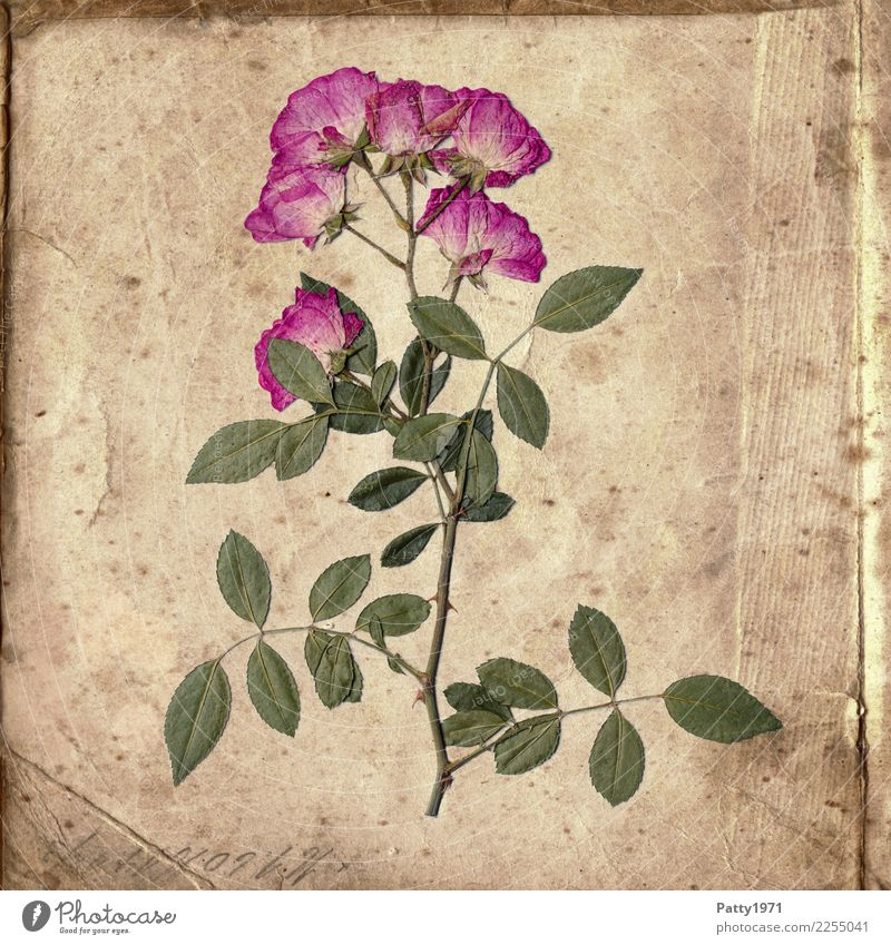 Nature Old Plant Green Flower Calm Natural Time Brown Pink Contentment Retro Characters Esthetic Happiness Transience