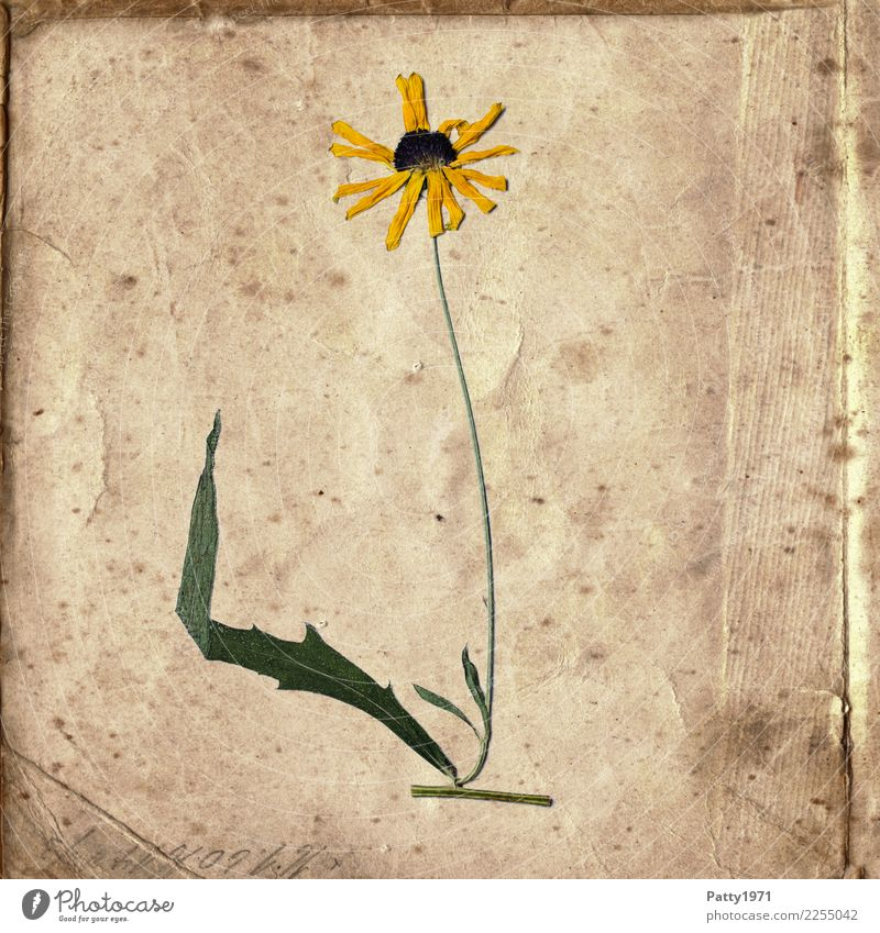 Nature Old Green Calm Yellow Natural Time Brown Contentment Retro Characters Esthetic Happiness Transience Paper Past