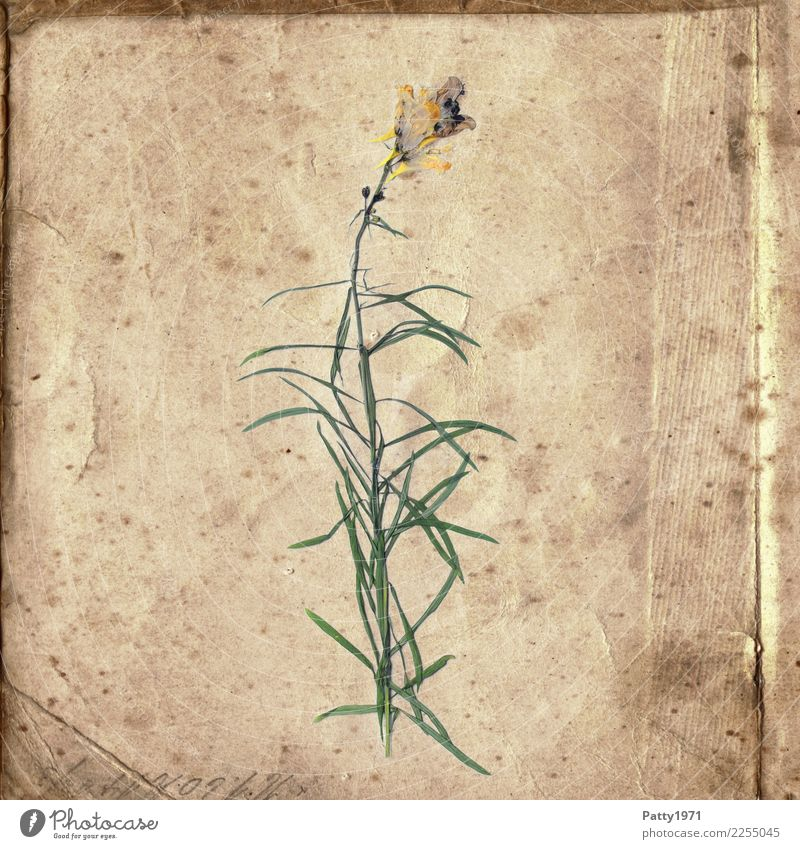Nature Old Plant Green Flower Calm Yellow Natural Time Brown Contentment Retro Characters Esthetic Joie de vivre (Vitality) Transience