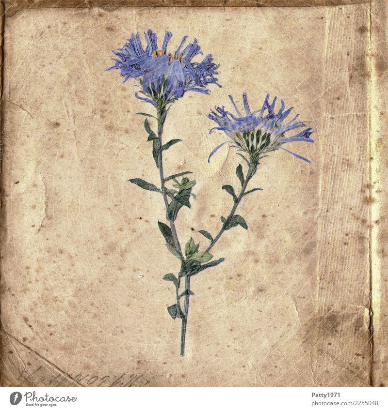 Nature Old Plant Blue Green Flower Calm Natural Time Brown Contentment Retro Characters Esthetic Joie de vivre (Vitality) Transience