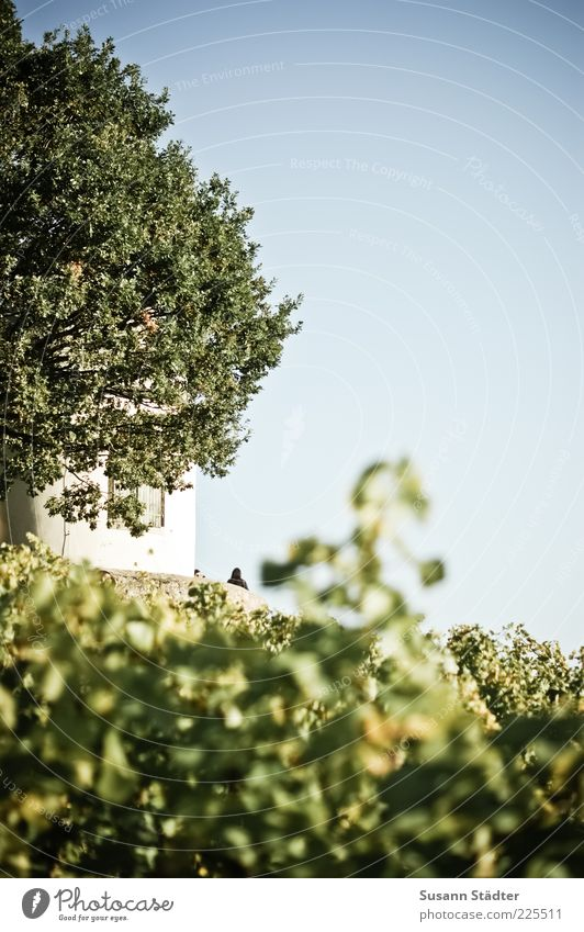 Human being Nature Tree Leaf Environment Bright Tower Vine Blue sky Hedge Cloudless sky Wine growing Wackerbarth Castle