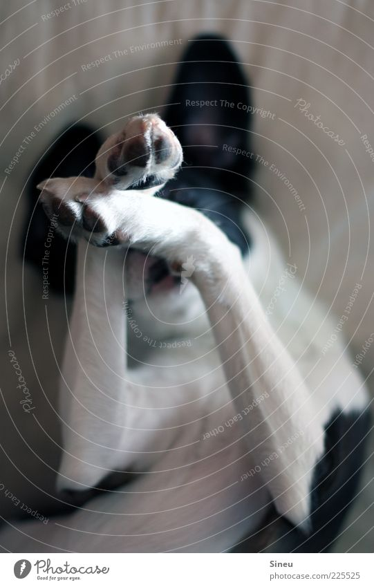 Five more minutes... Animal Dog Paw 1 Lie Dream Brash Cuddly Cute Black White Contentment Joie de vivre (Vitality) Safety (feeling of) Sympathy Colour photo