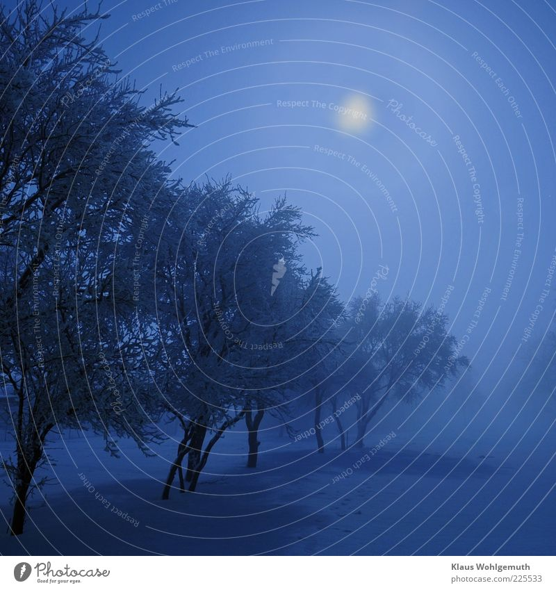 icy moon Sky Moon Winter Climate Fog Snow Blue Romance Cold Calm Hoar frost Colour photo Exterior shot Night Light Shadow Silhouette Back-light Long exposure