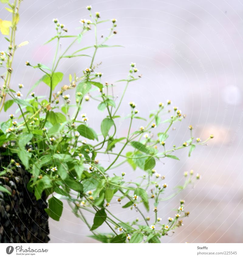 Nature Green Summer Plant Flower Leaf Environment Gray Blossom Bright Natural Decoration Bushes Simple Embellish Foliage plant