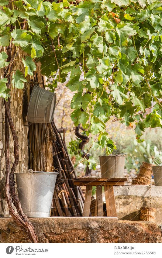 Still life of pots, bowls and baskets. Under a roof of wild wine they wait for their turn. leaves Garden plaited baskets Tin metal bucket tin bowl Vine leaf