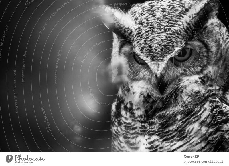 Strong Eyes Nature Wild plant Wild animal Bird Animal face Wing 1 Bravery Self-confident Cool (slang) Optimism Power Willpower Might Determination Watchfulness