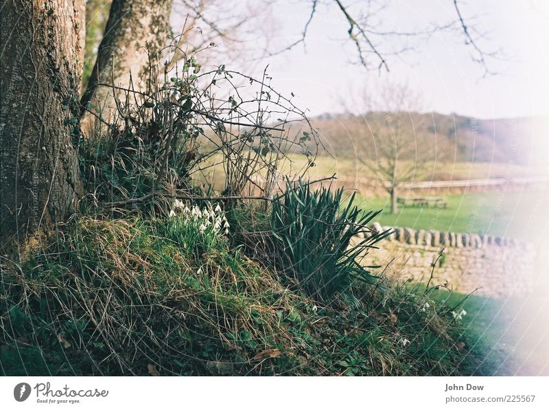 Nature Tree Landscape Grass Spring Esthetic Bushes Analog Beautiful weather Moss England Rural Spring fever Snowdrop Spring flower Spring day