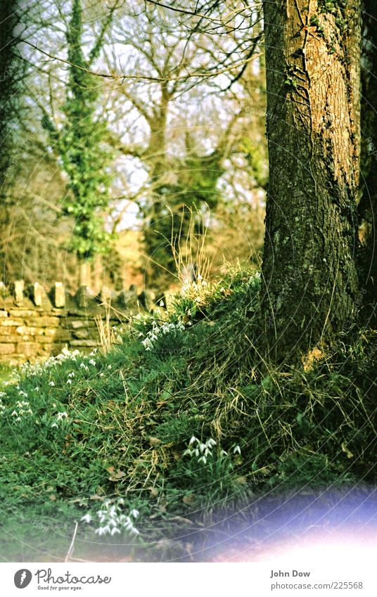 Green Tree Flower Wall (building) Grass Spring Wall (barrier) Esthetic Growth Bushes Analog Tree trunk Beautiful weather Moss England Surrealism