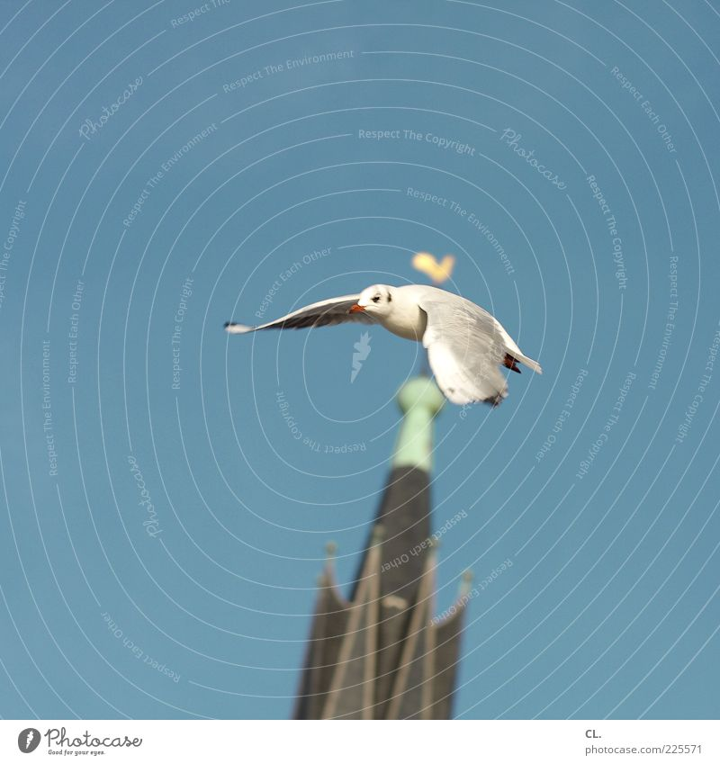 Sky Nature Blue Summer Animal Freedom Bird Flying Esthetic Church Wing Animal face Beautiful weather Seagull Beak