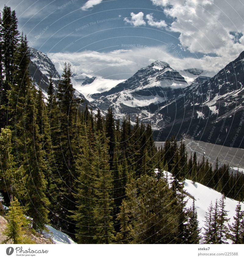 Icefields Parkway Vacation & Travel Snow Mountain Tree Snowcapped peak River bank Nature Canada Fir tree Rocky Mountains Colour photo Exterior shot Deserted Day