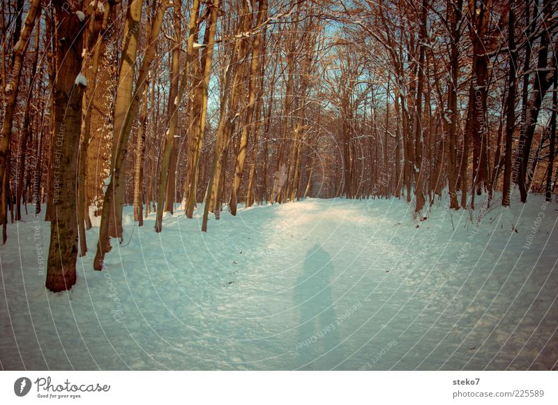 photographs faster than his shadow Snow Forest Lanes & trails Cold Stagnating Bleak Winter forest Exterior shot Shadow Sunlight Human being Footpath 1 Tree