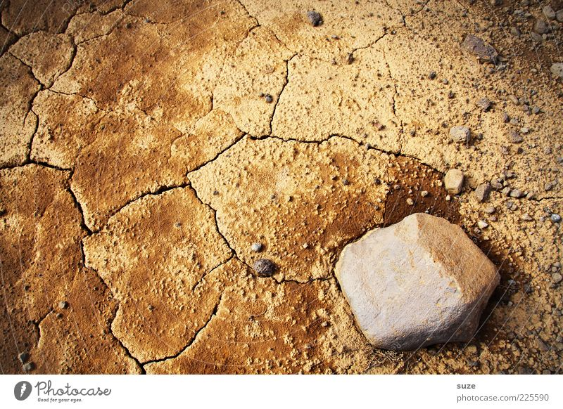 Nature Environment Sand Stone Brown Earth Climate Desert Dry Crack & Rip & Tear Drought Climate change Sustainability Sparse Ochre