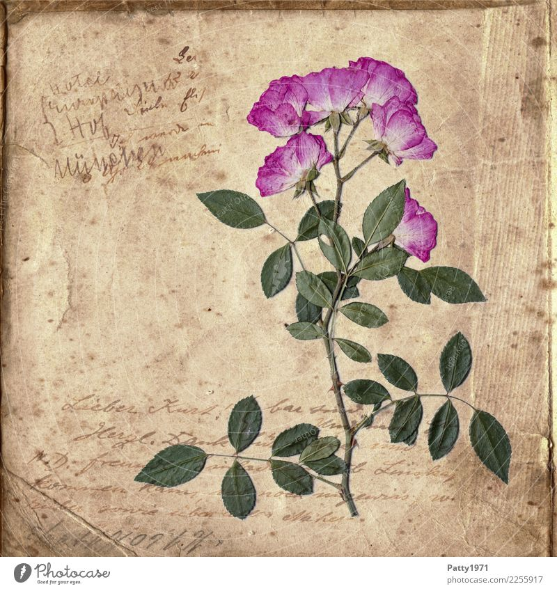 Nature Old Plant Green Flower Calm Natural Time Brown Pink Contentment Retro Characters Esthetic Joie de vivre (Vitality) Transience