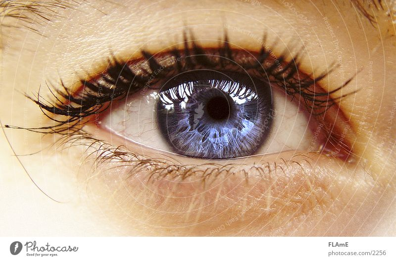 Blue Eye Human being Woman Youth (Young adults) Beautiful 18 - 30 years Adults Warmth Eyes Life Feminine Natural Healthy Glittering Illuminate Near