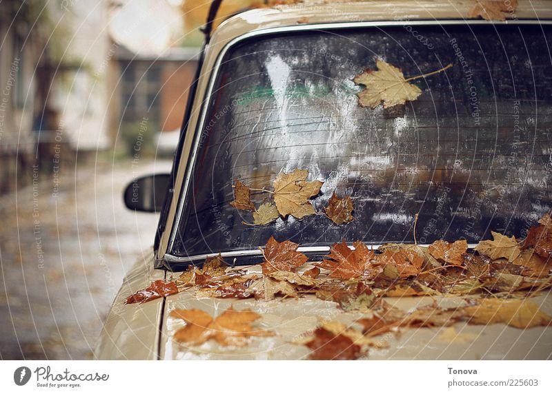 Autumn mood Elements Climate change Rain Leaf Small Town Transport Car Glass Metal Water Drop Emotions Moody Loneliness Art Life Sadness Promenade Colour photo