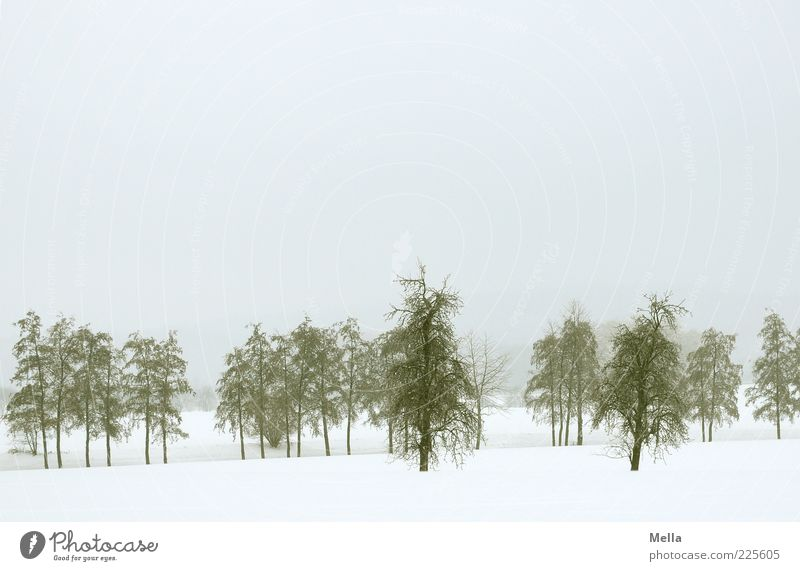 Nature Tree Winter Cold Snow Environment Landscape Gray Moody Weather Climate Natural Gloomy