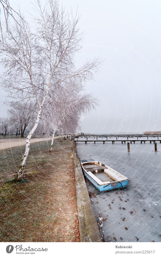 aground Winter Rowboat Water Ice Frost Tree Lakeside Inland navigation Old Cold Broken Serene Calm Loneliness Stagnating Past Change Colour photo Wide angle