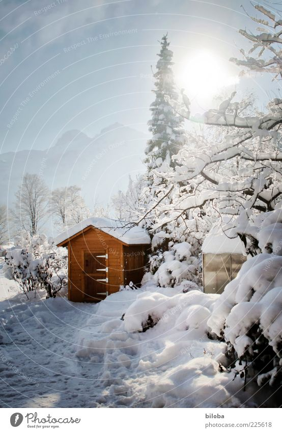 White Blue Tree Sun Winter Snow Garden Brown Ice Frost Beautiful weather Gardenhouse