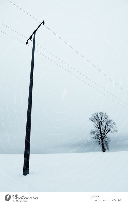 Sky Nature White Blue Tree Winter Calm Snow Landscape Tall Electricity pylon Telegraph pole