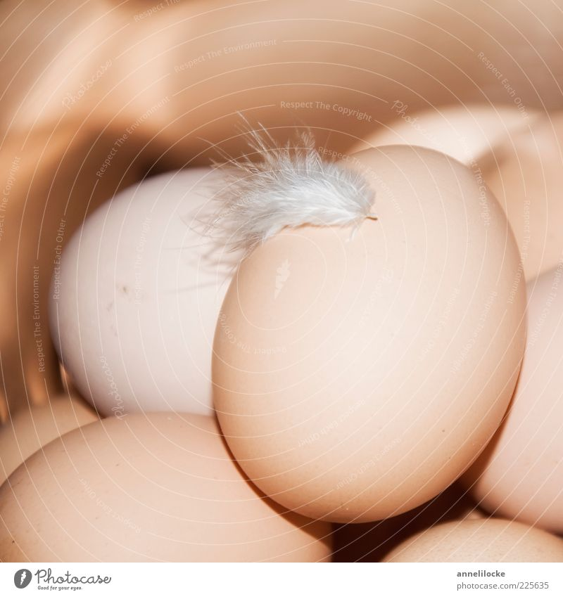 country bumpkin Food Egg Hen's egg Nutrition Organic produce Feather Delicious Soft Brown Hope Surprise Growth Spring Delicate Many Colour photo Subdued colour