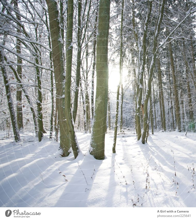 Secret's secret Environment Nature Landscape Plant Winter Tree Forest Freeze Glittering Illuminate Infinity Cold White Idyll Beautiful Beautiful weather Bleak
