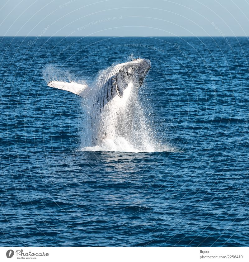 ocean like concept of freedom Nature Vacation & Travel Blue Beautiful White Ocean Animal Environment Natural Freedom Jump Wild Island Large Observe Seasons