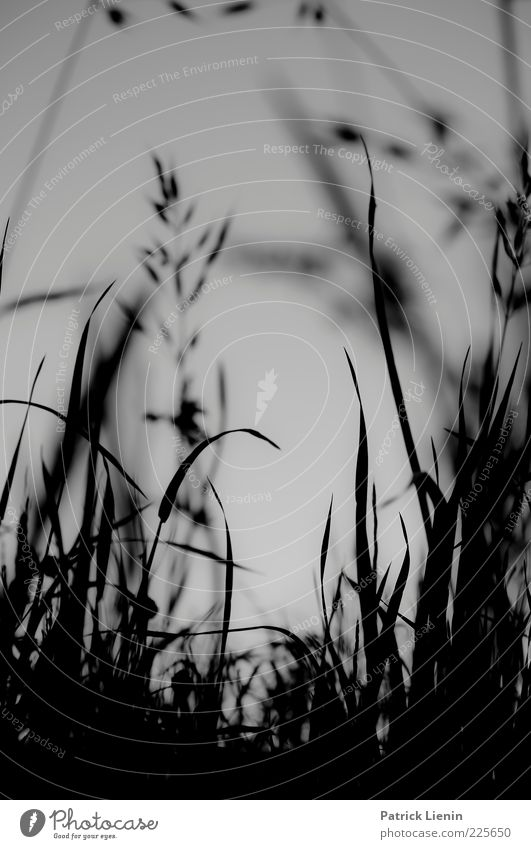 evening light Environment Nature Landscape Plant Summer Grass Meadow Breathe Crouch Esthetic Tall Beautiful Ground Black & white photo Close-up Detail Deserted