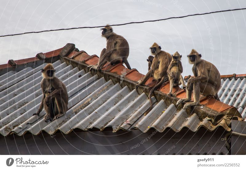 gang of monkeys Vacation & Travel Tourism Trip Adventure Sightseeing Roof Wild animal Animal face Monkeys Group of animals Animal family Observe Cool (slang)