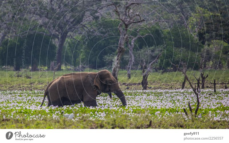 flower bath Vacation & Travel Tourism Trip Adventure Sightseeing Safari Nature Landscape Plant Tree Flower Lake Sri Lanka Asia Animal Wild animal Animal face