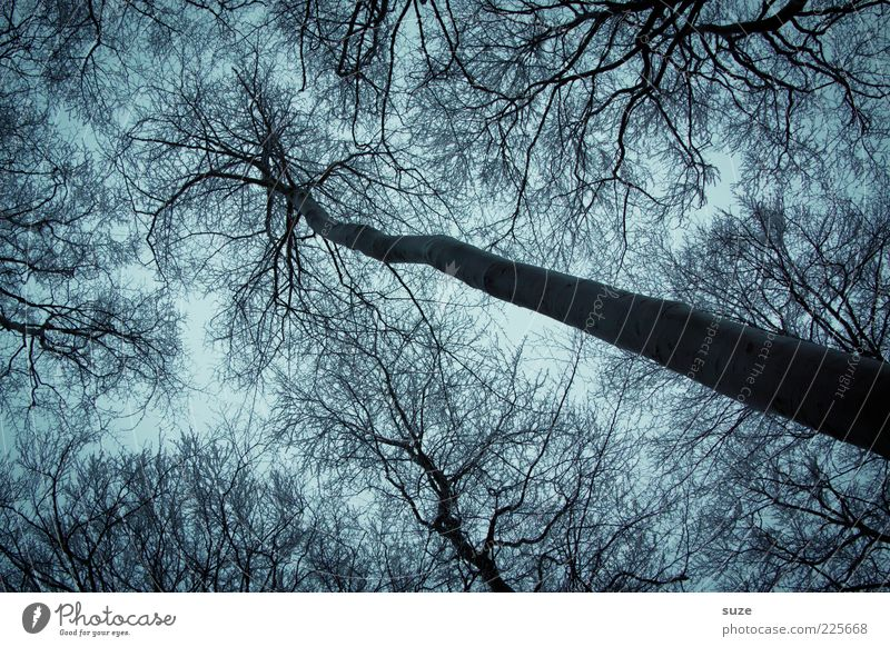 gripper Environment Nature Winter Weather Tree Forest Exceptional Dark Large Cold Blue Gray Sadness Grief Growth Branchage Twig Treetop Leafless Tree trunk Tall