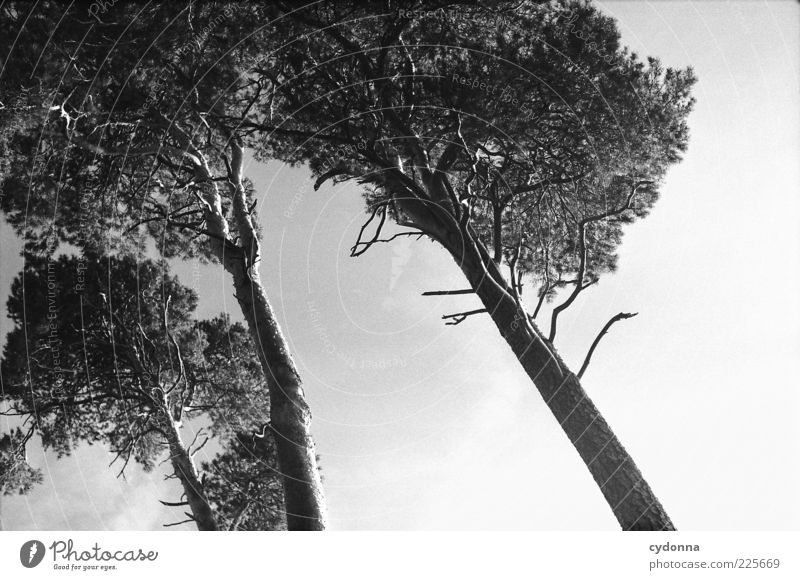 Three Environment Nature Sky Wind Tree Esthetic Movement Loneliness Uniqueness Emotions Beautiful Pine Analog Composing 3 Growth Weigh Twigs and branches