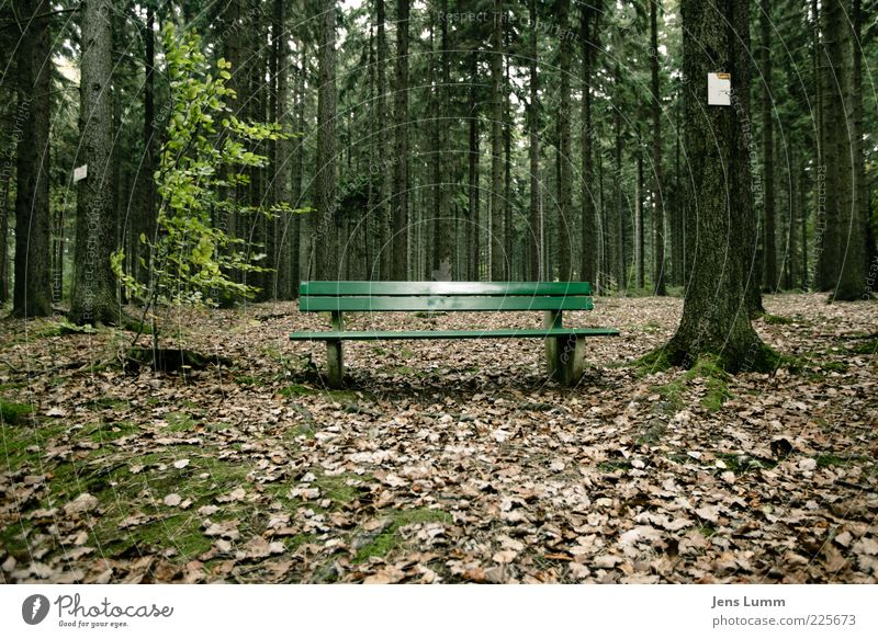 wait and see Environment Nature Autumn Forest Brown Green Loneliness Bench Leaf Moss Break Colour photo Exterior shot Deserted Day Central perspective