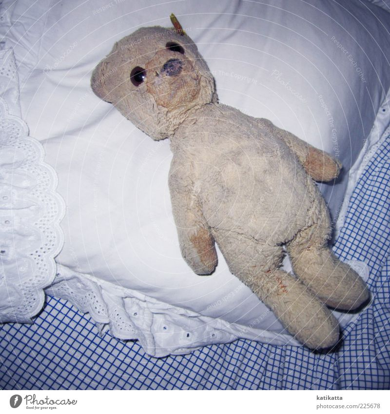 sleepless Bed Toys Teddy bear Cuddly toy Collector's item Old Lie Dirty Cute Positive Retro Safety Safety (feeling of) Longing Uniqueness Colour photo