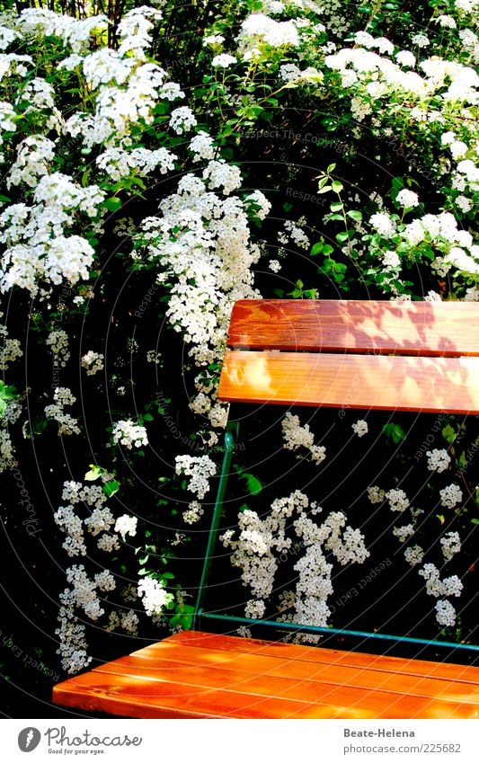 Nature White Green Plant Joy Summer Flower Leaf Calm Relaxation Environment Blossom Spring Moody Sit Esthetic