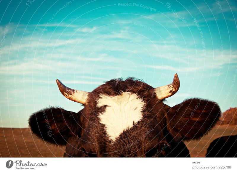 Nature Animal Eyes Head Natural Ear Animal face Listening Cow Beautiful weather Antlers Ecological Partially visible Organic farming Life Livestock breeding