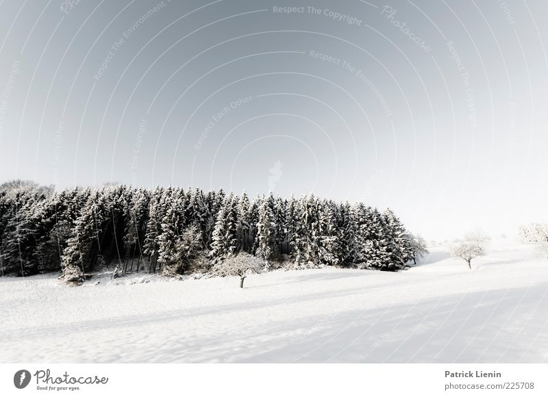 Penguins in the cold Environment Nature Landscape Elements Air Sky Cloudless sky Winter Weather Beautiful weather Snow Plant Tree Forest Hill Looking