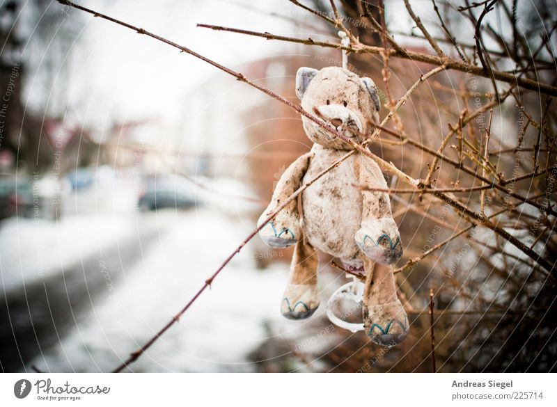 keep smiling Teddy bear Nature Winter Snow Bushes Street Toys Cuddly toy Hang Sadness Exceptional Dirty Happiness Broken Gloomy Doomed Colour photo